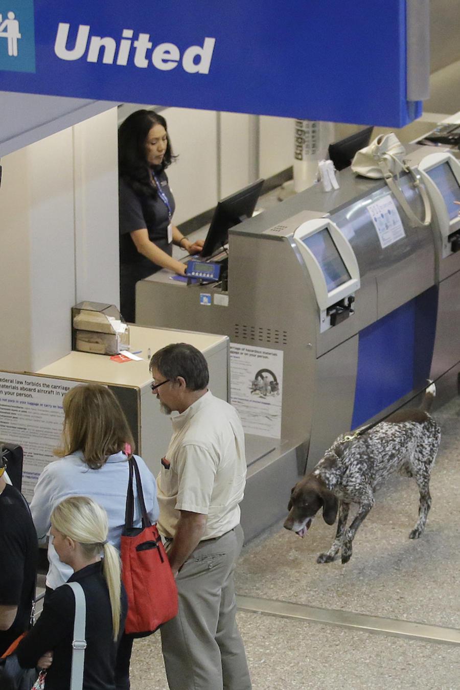 Control de seguridad con un perro en el aeropuerto de Salt Lake City en junio.