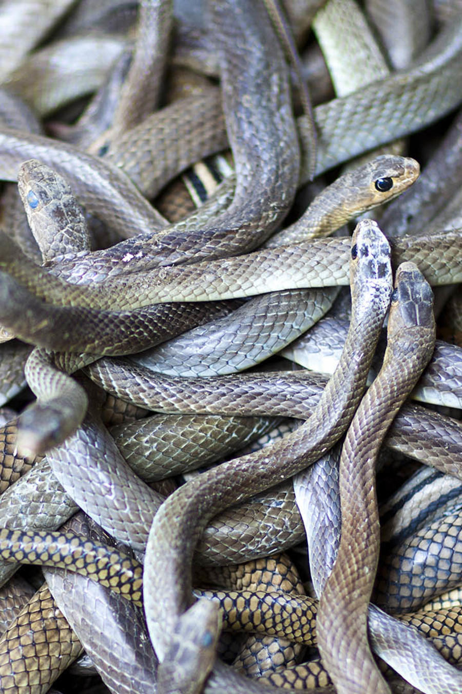 Hallan reptiles peligrosos en una casa de Los Angeles