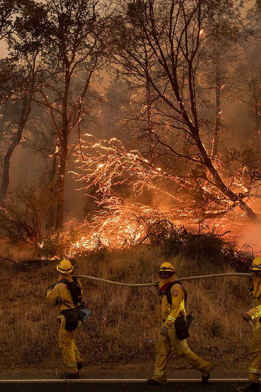 Bomberos combaten incendio forestal en California