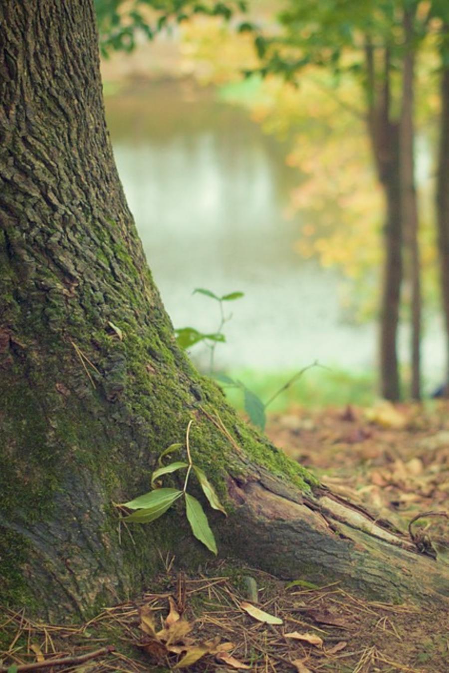 árbol del bosque