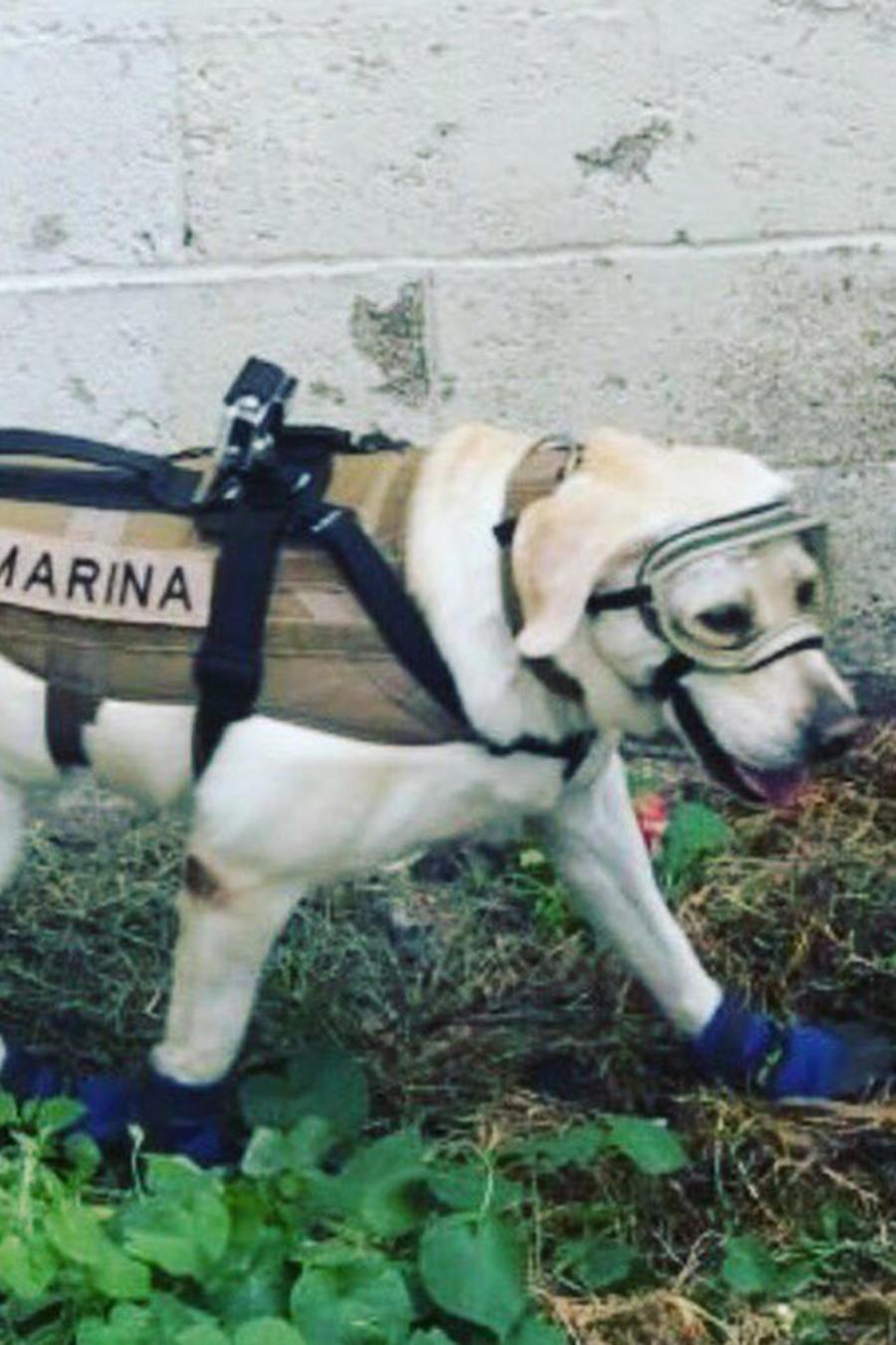 Frida y Titan perros rescatistas