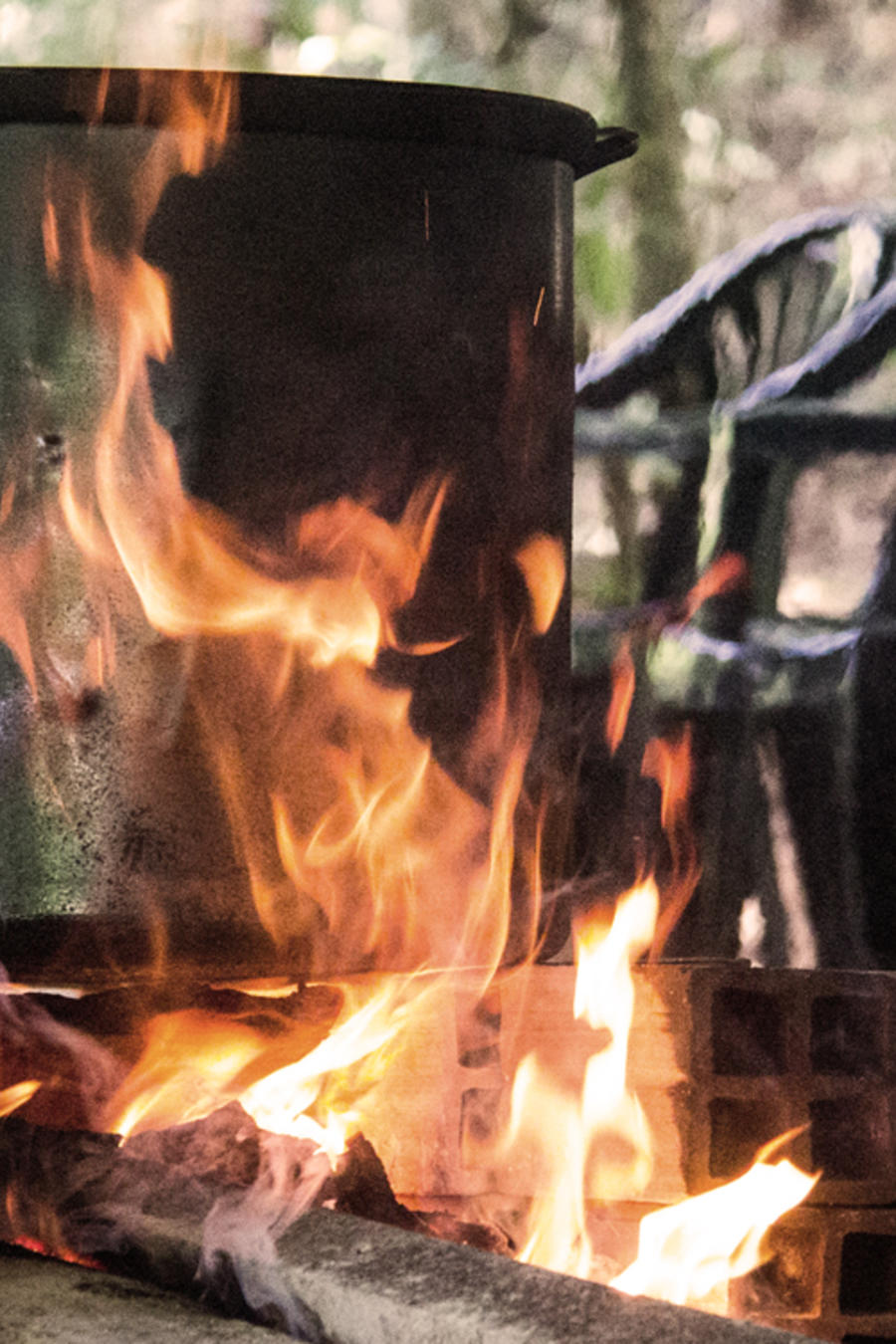 ayahuasca holla preparacion