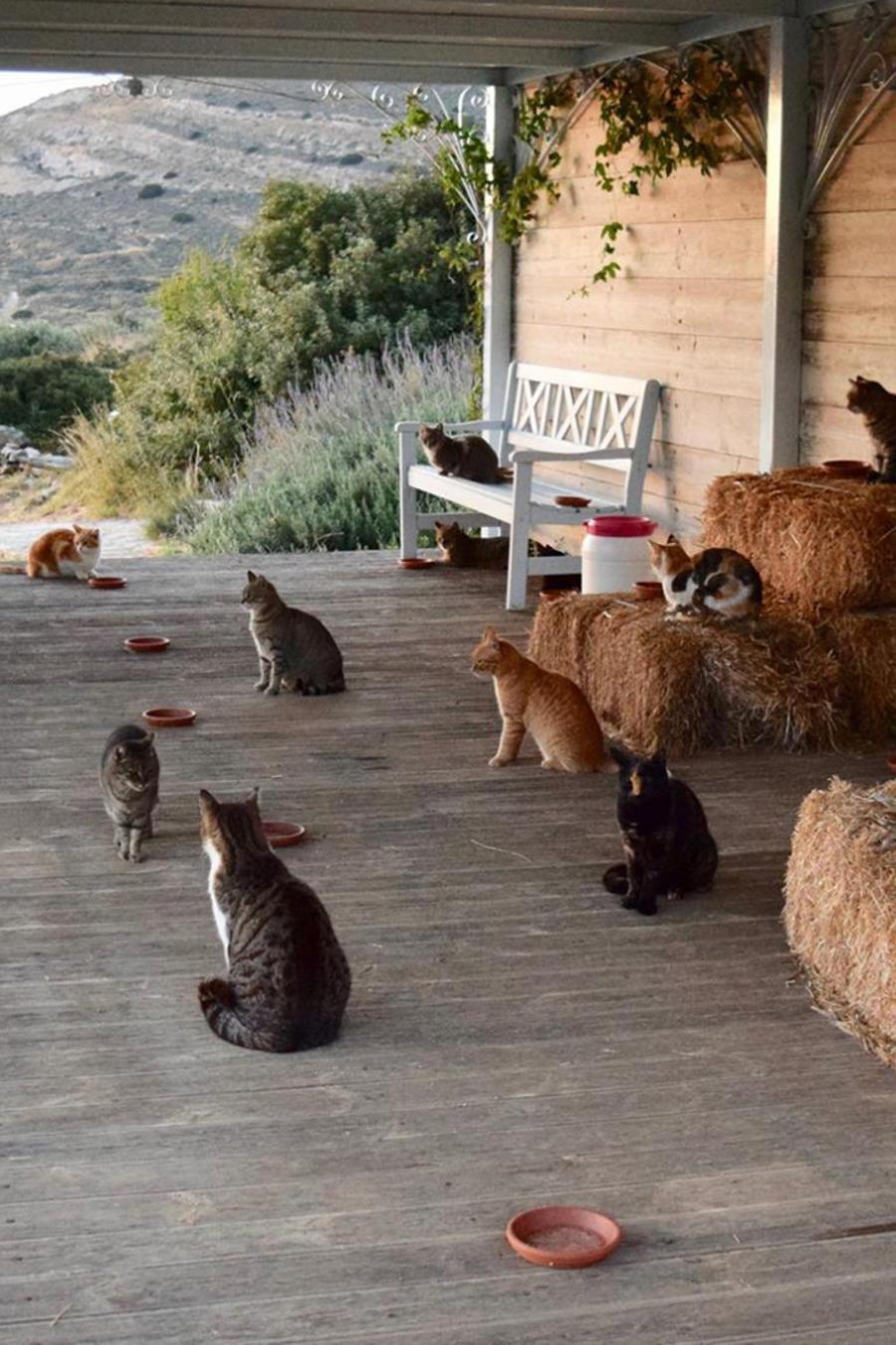 gatos en grecia