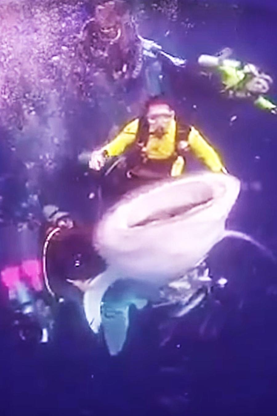 Buzo montando un tiburón