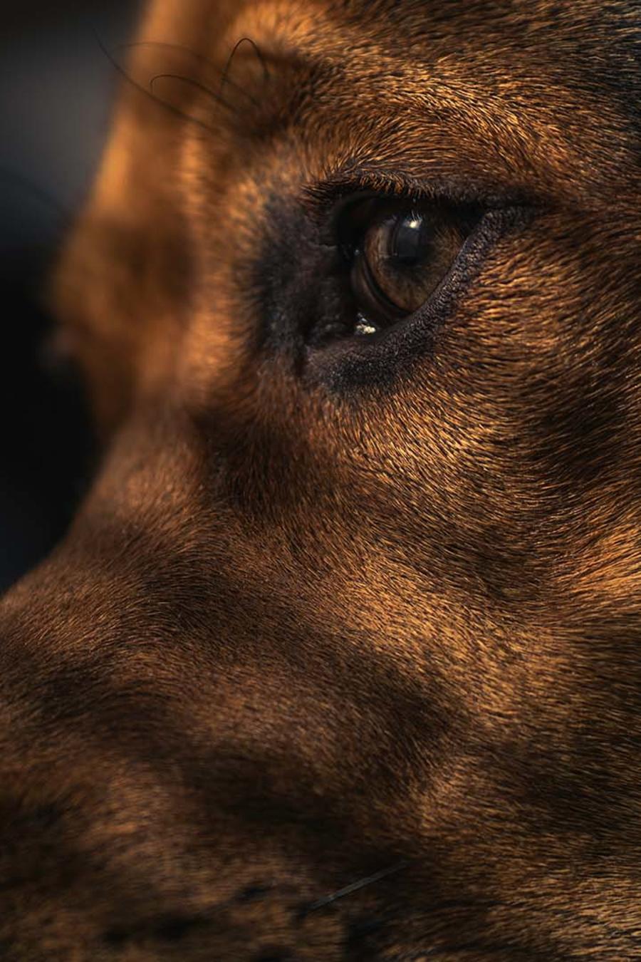 El llanto de un perro abandonado