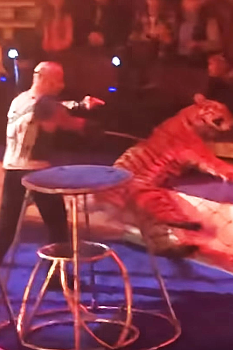 Tigre convulsiona
