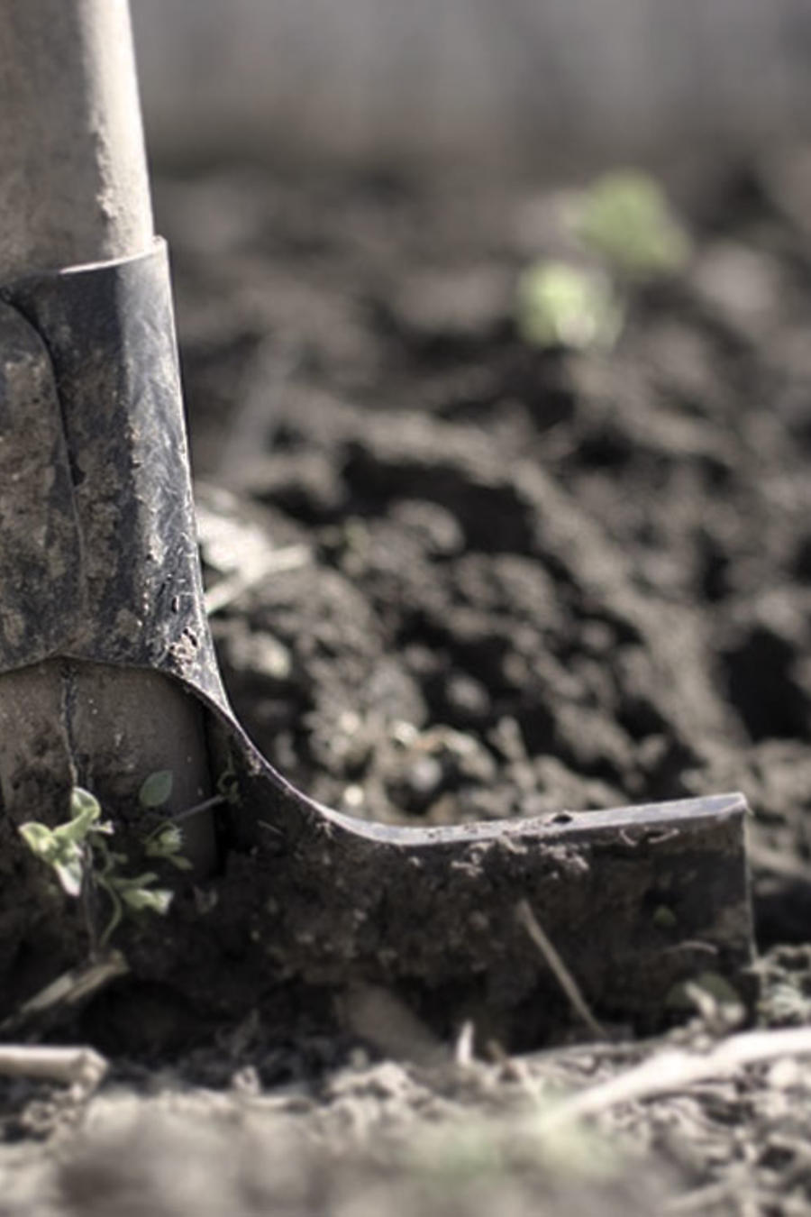pala de cavar