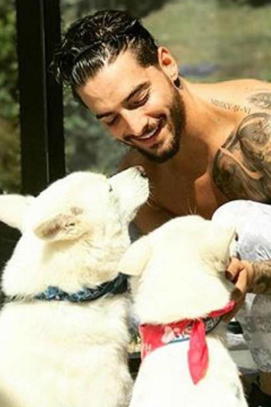 Maluma y sus mascotas