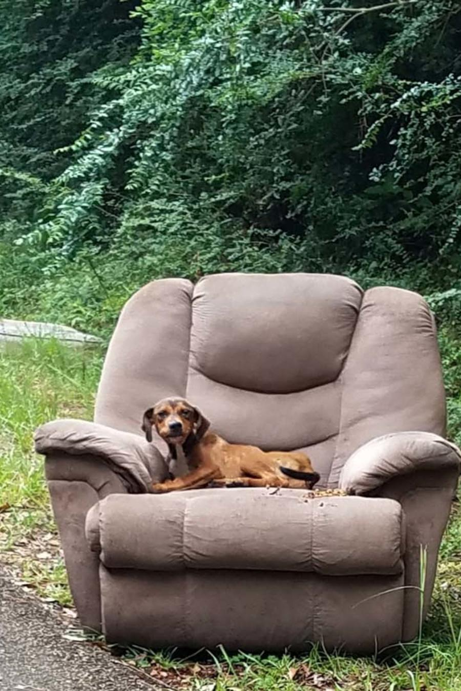 Encuentran a perro abandonado en Brookhaven, Mississippi
