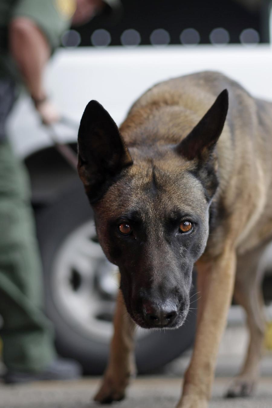 Fotografía de archivo de un elemento canino de la Patrulla Fronteriza en un punto de control
