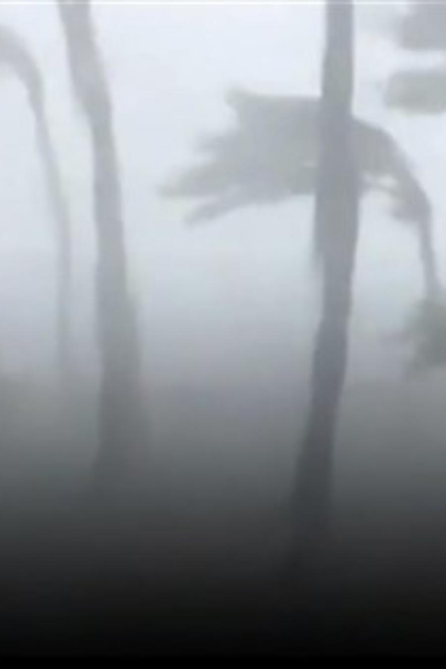 Imagen de las palmeras afuera de la casa dañada por el huracán Dorian