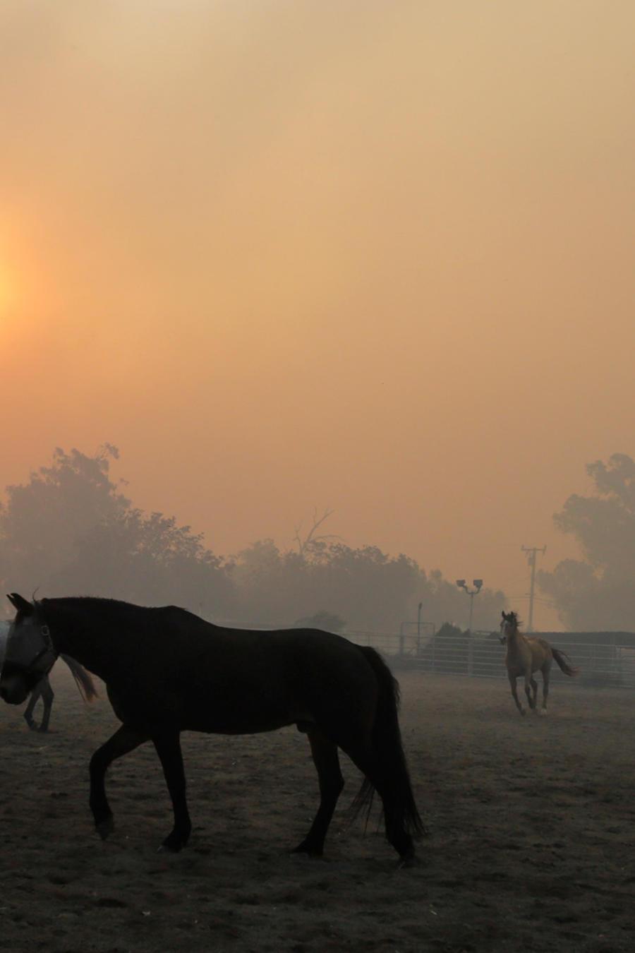 Caballos en un rancho en Simi Valley
