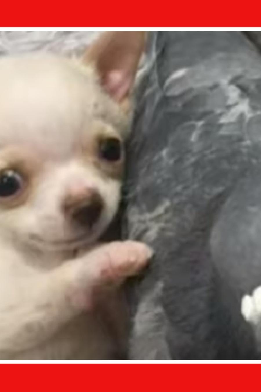 Perro paloma amistad