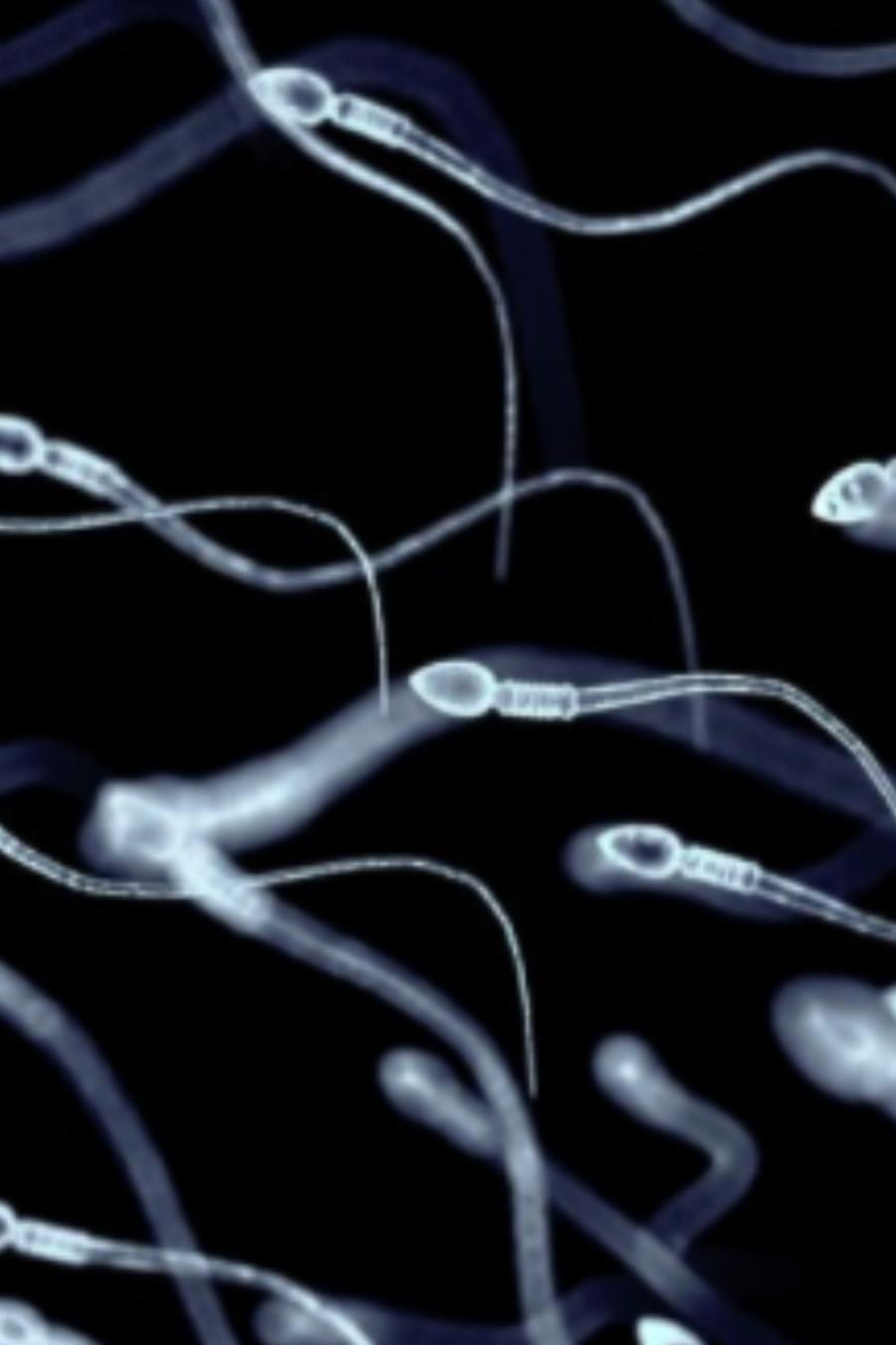 Movimiento de espermas