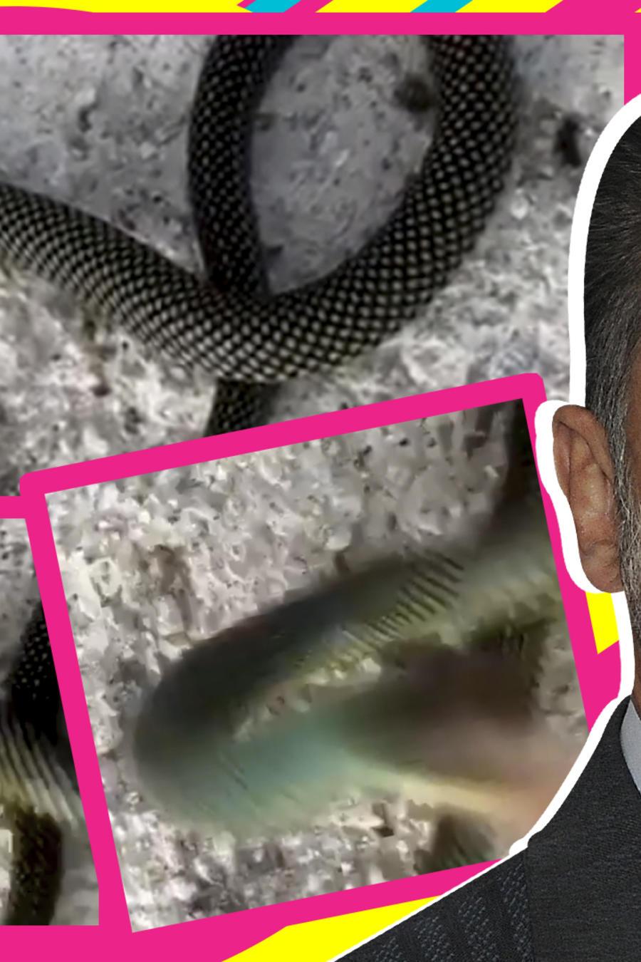 Sergio Mayer ataque víbora