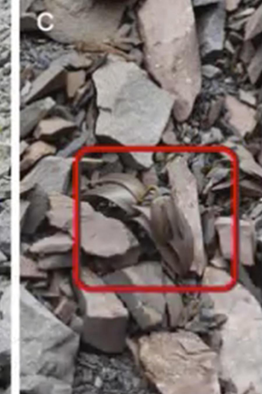 Plantas se vuelven invisibles