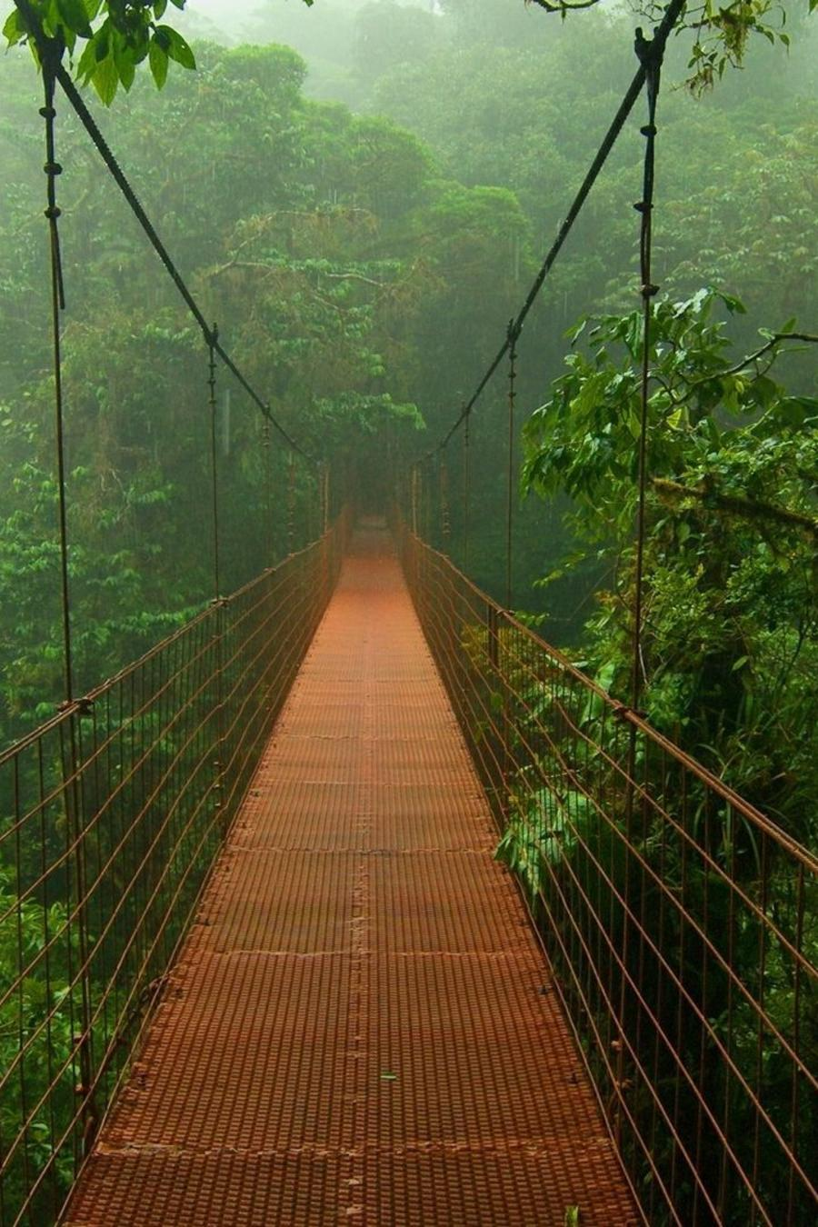 bridge-photo-jungle.jpg