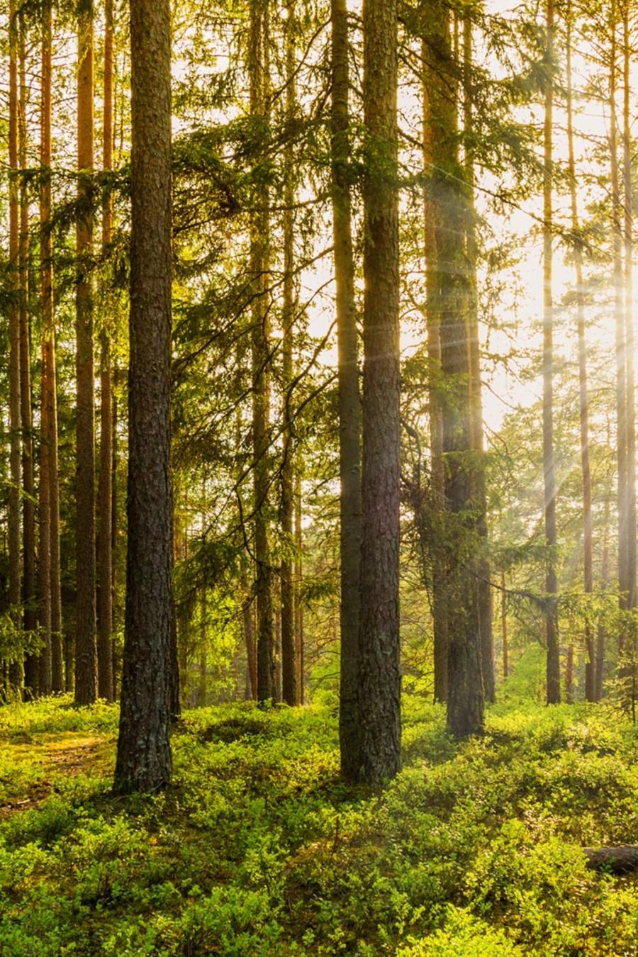 Bosque al atardecer