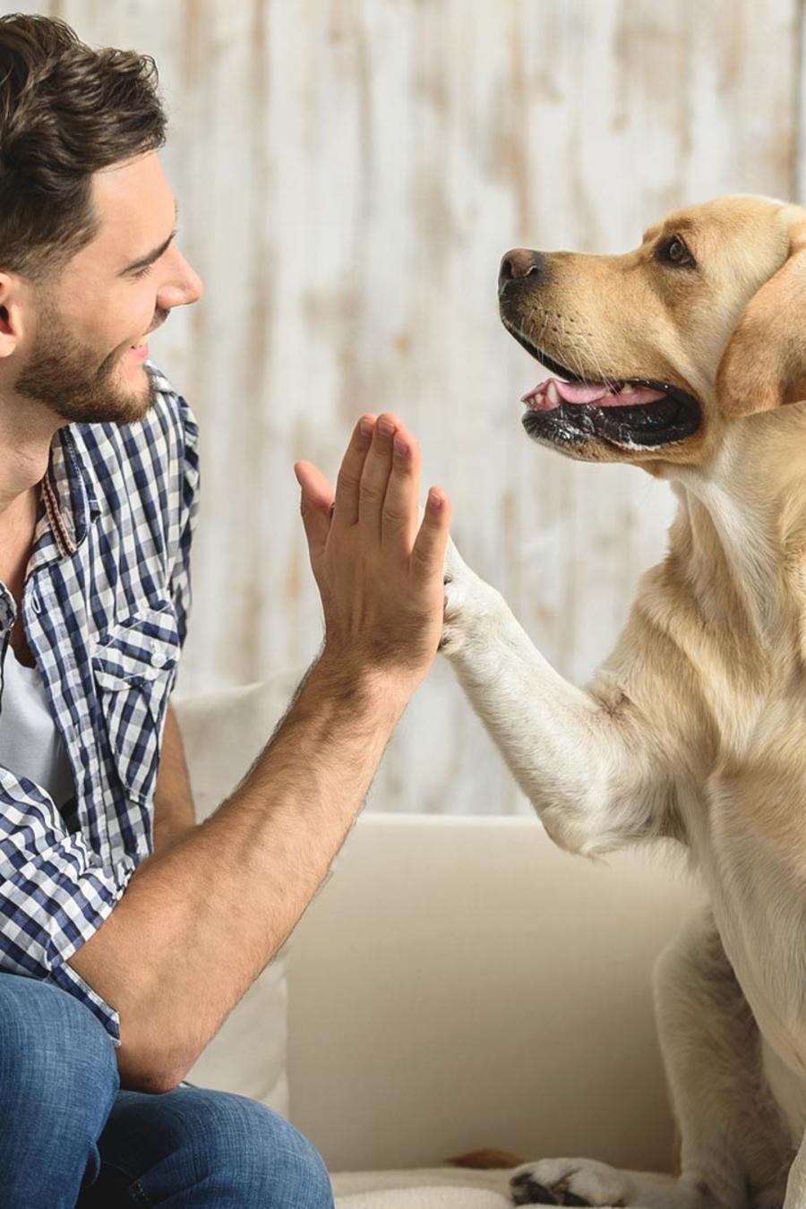 Hombre y perro jugando