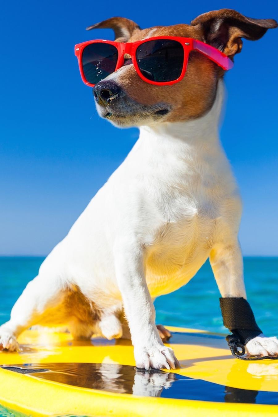 Perro sobre tabla de surf