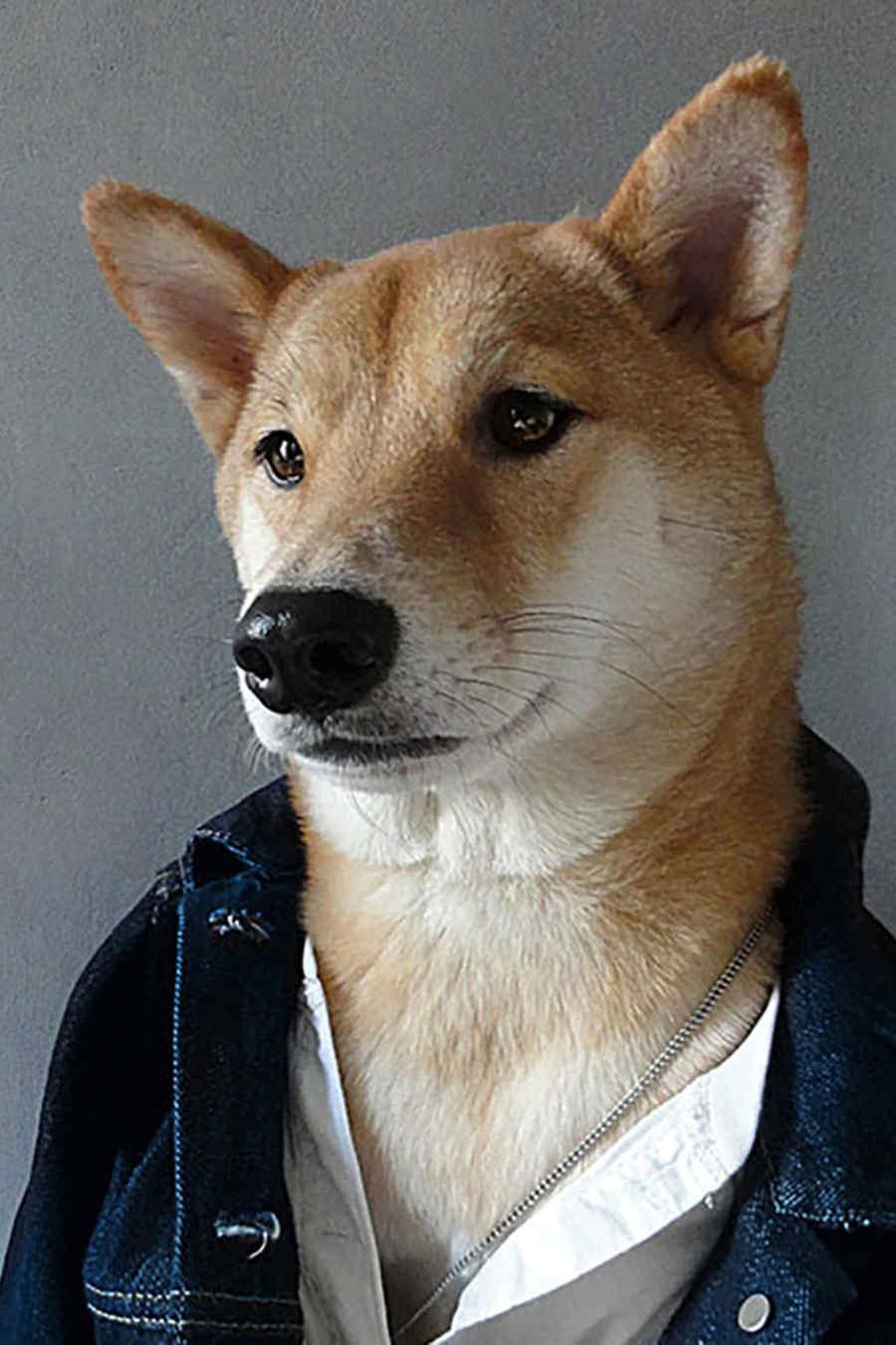 Menswear dog  con chaqueta de denim