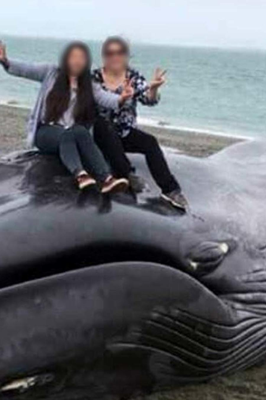 Maltrato ballena