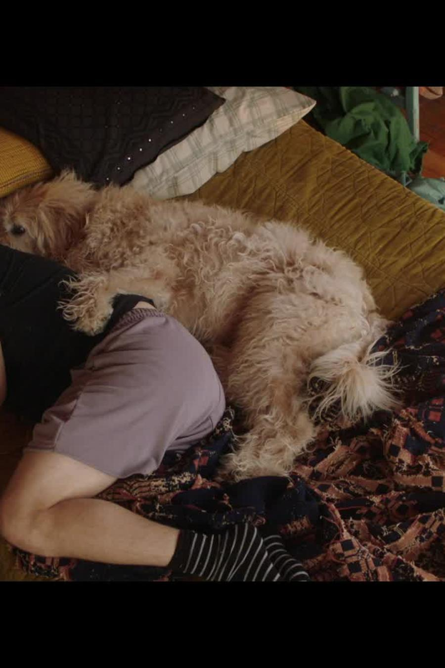 """Watch This Exclusive Clip for the Movie """"Dog Days"""""""