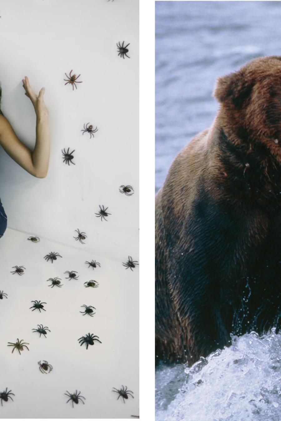Arañas y osos