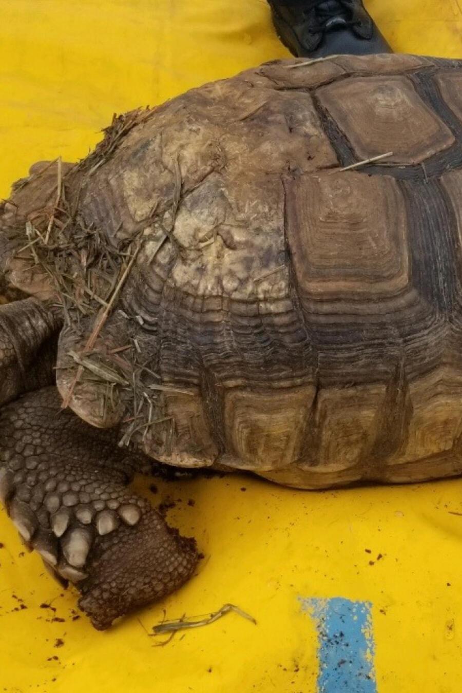 Bomberos rescatan a tortugas de un incendio en Ohio