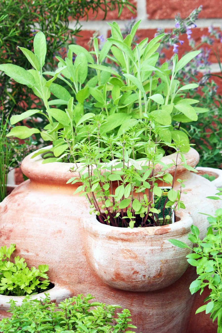 Jardín culinario de hierbas