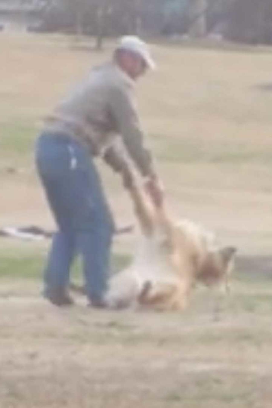 perro se hace el muerto