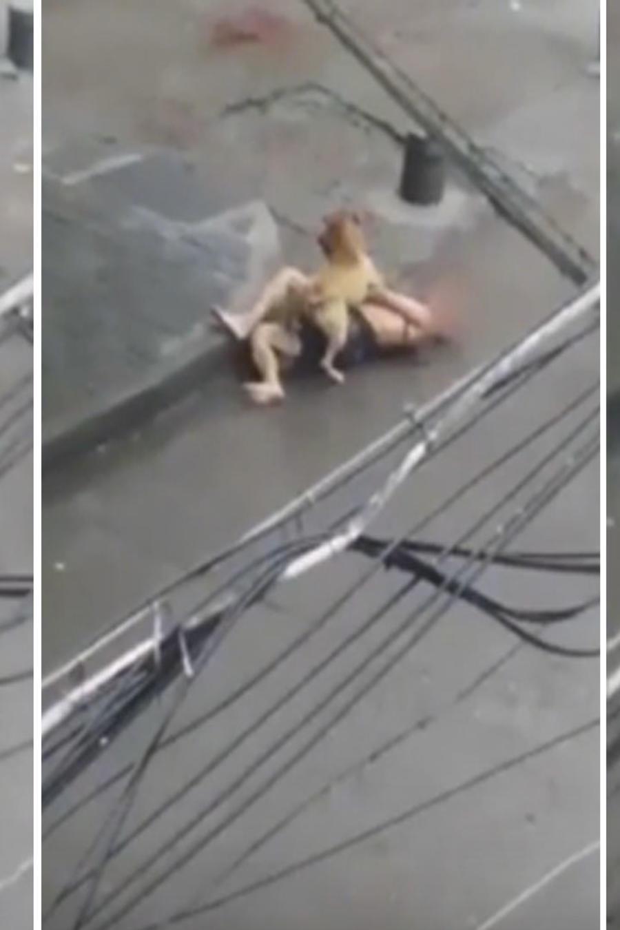 Un perro ataca salvajemente a un hombre en China