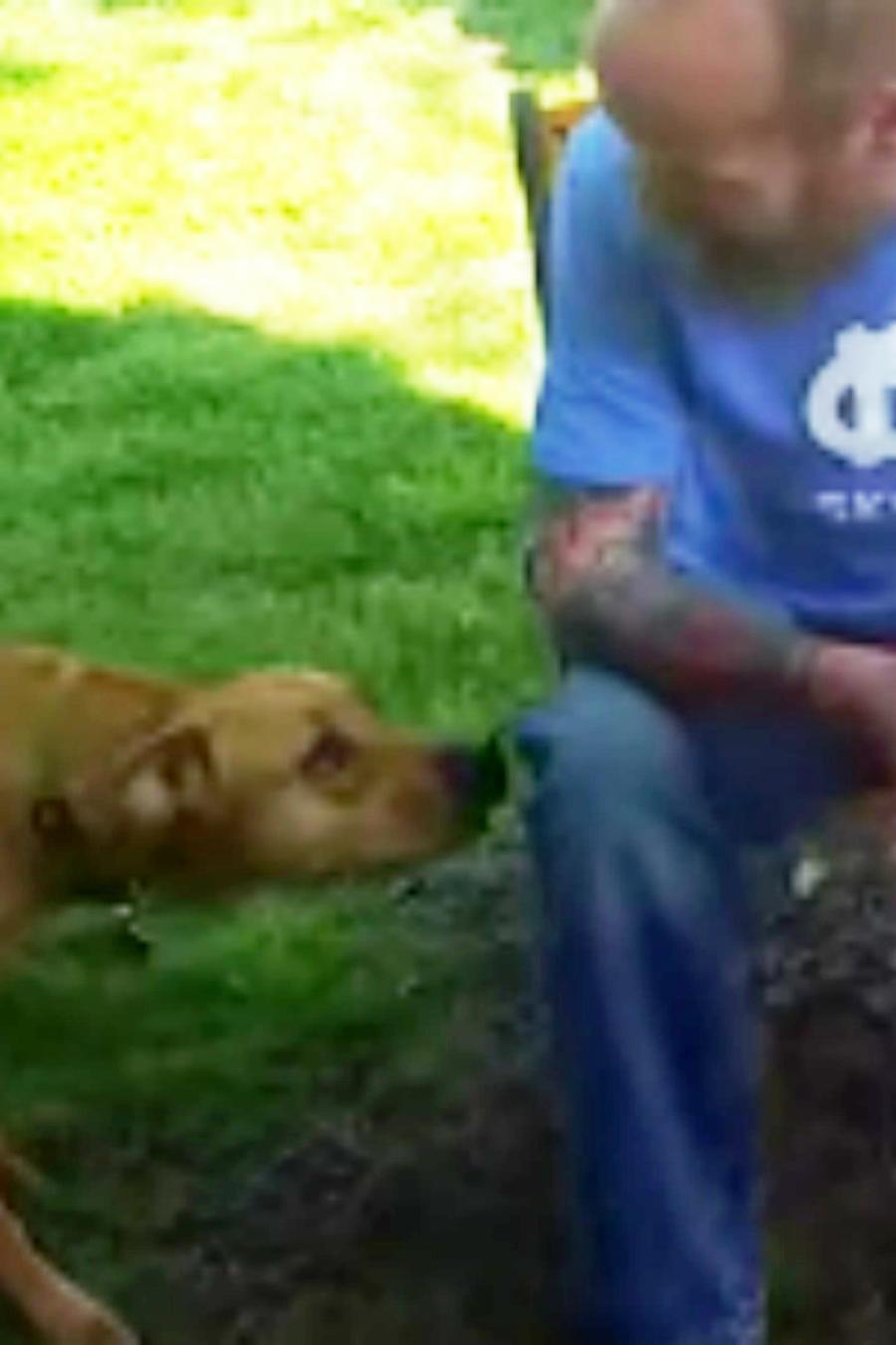 Perro reconociendo a su dueño