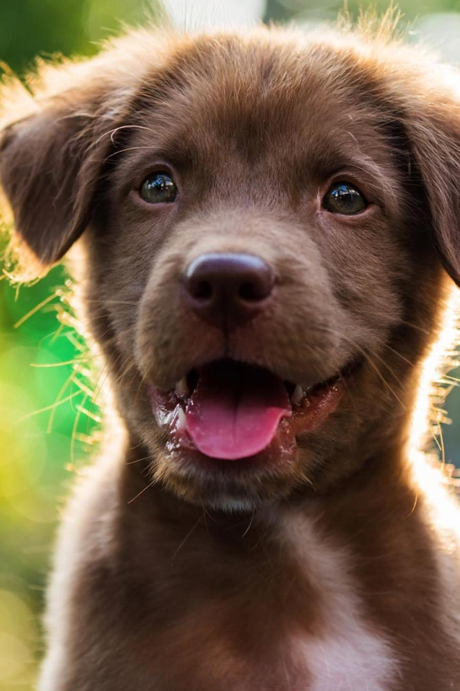 Cachorro con la lengua afuera
