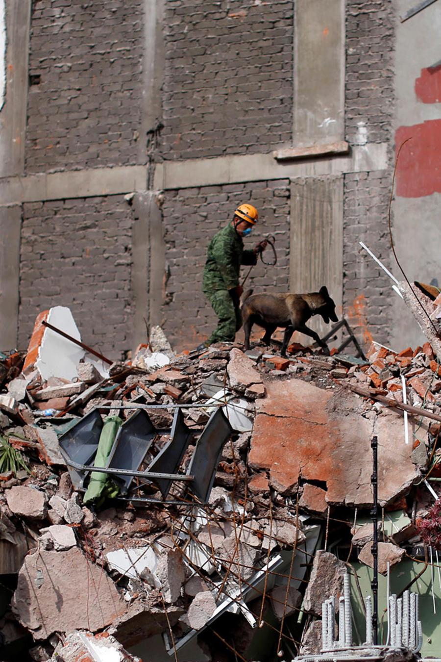 Un militar busca sobrevivientes con la ayuda de un perro entre los escombros de un edificio derrumbado en la Colonia Condesa de la Ciudad de México tras el sismo del 19 de septiembre de 2017.