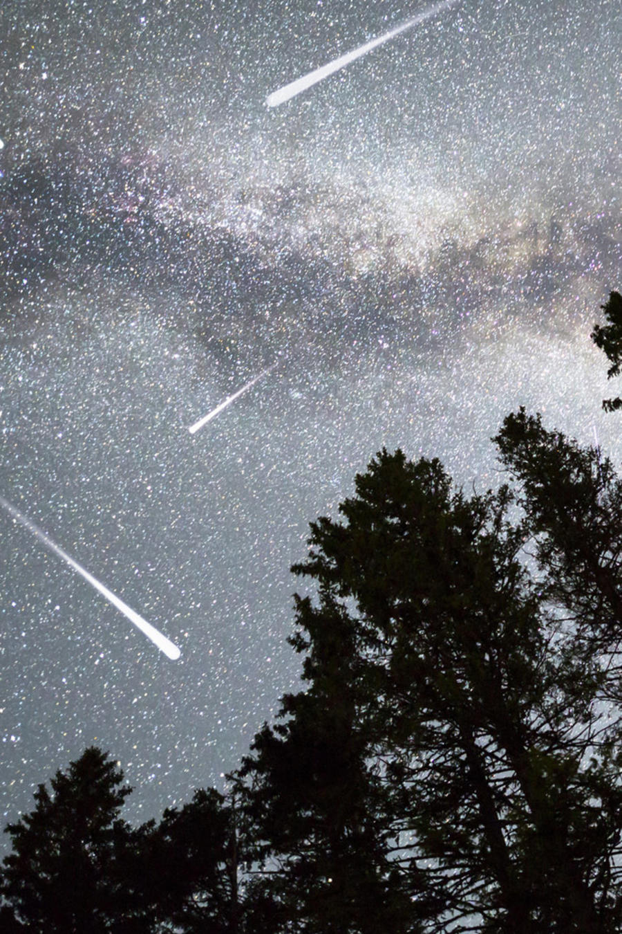 Pinos y lluvia de estrellas