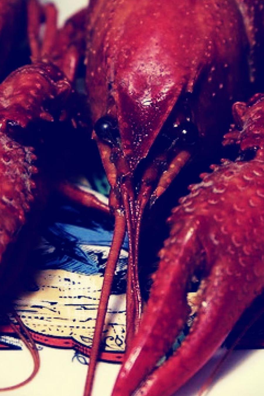 El cangrejo de río evitó convertirse en la cena arrancándose una de sus garras.