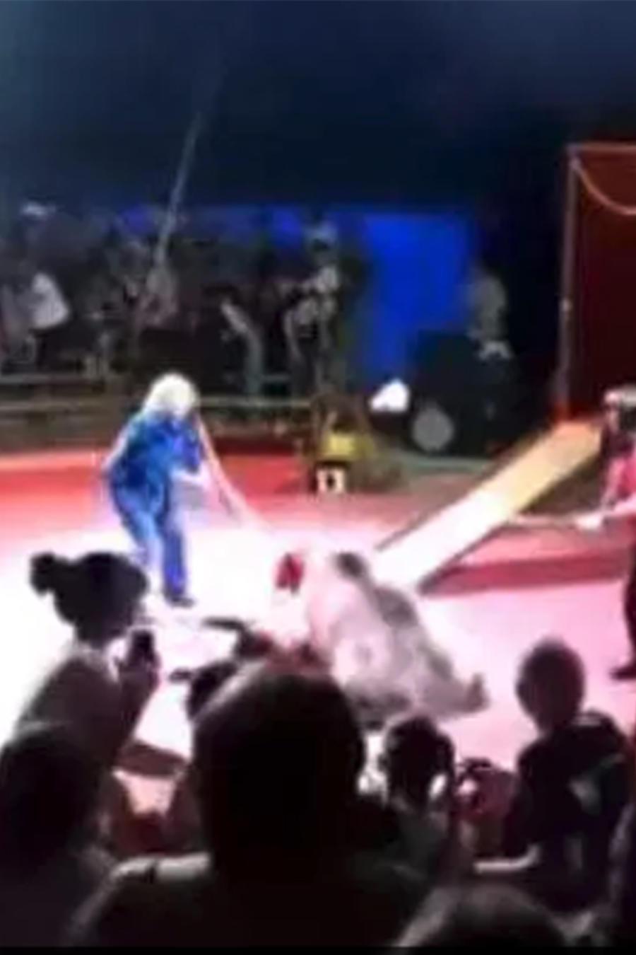 Oso ataca empleado de circo