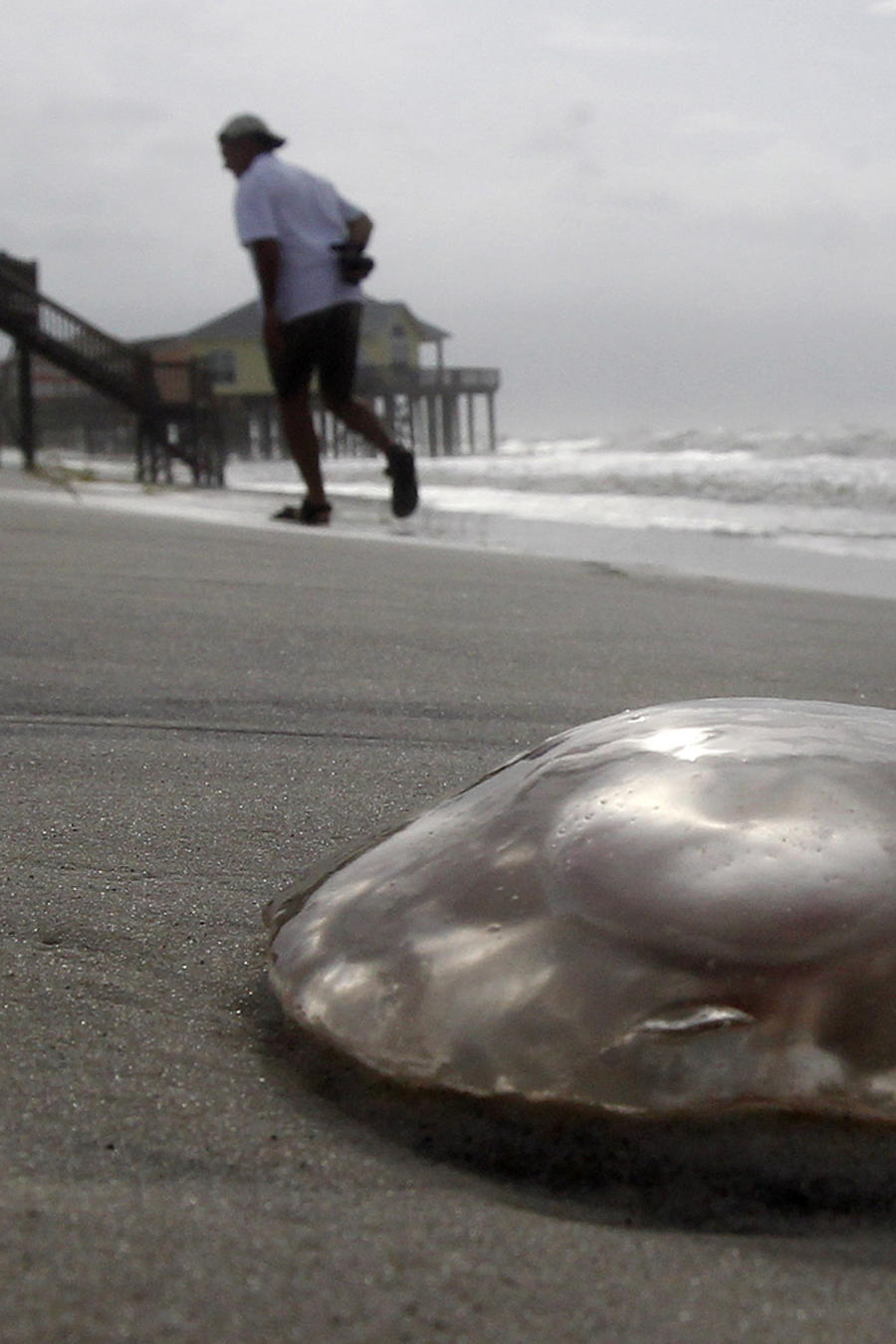 Medusas invaden playas de Florida