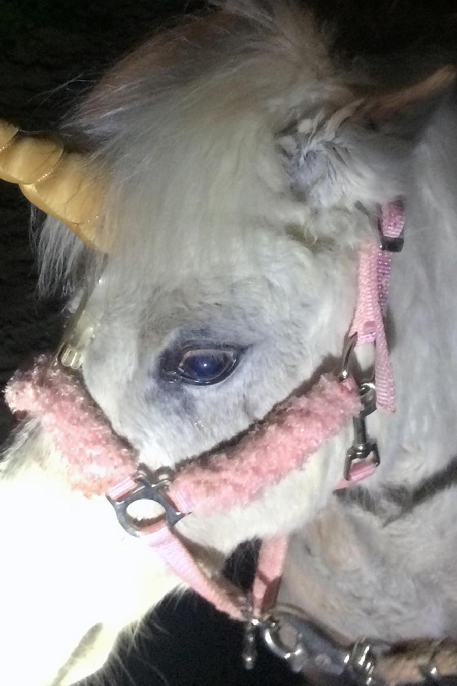 Hallazgo podría probar que los unicornios existieron