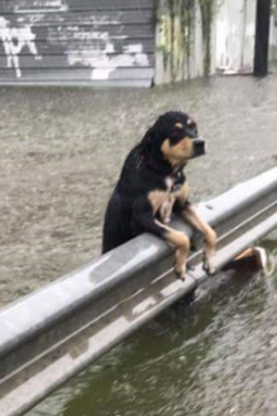 perros afectados huracan texas?itok=3pKdC0oY top 3 inspiró una batalla de baile bajo la lluvia causada por el