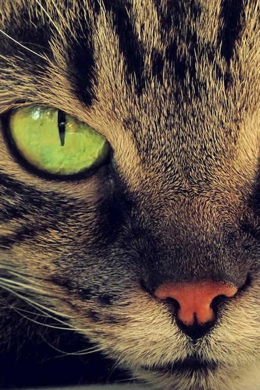 veterinarios sugieren que los animales se tienen que mantener en forma