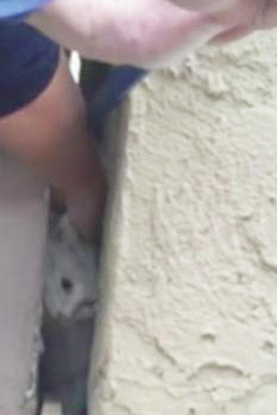 gato entre grietas de paredes