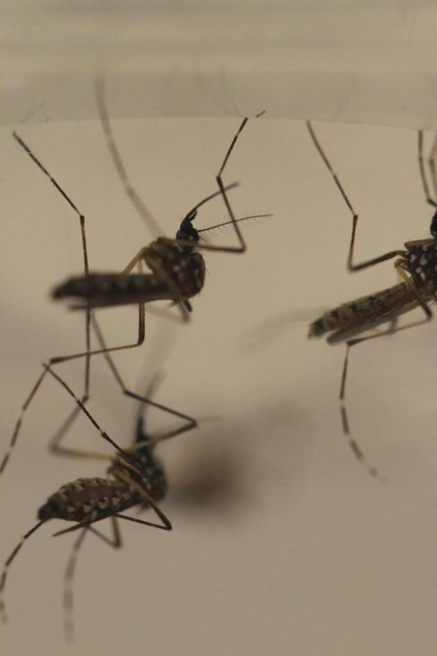 zika genera alarma