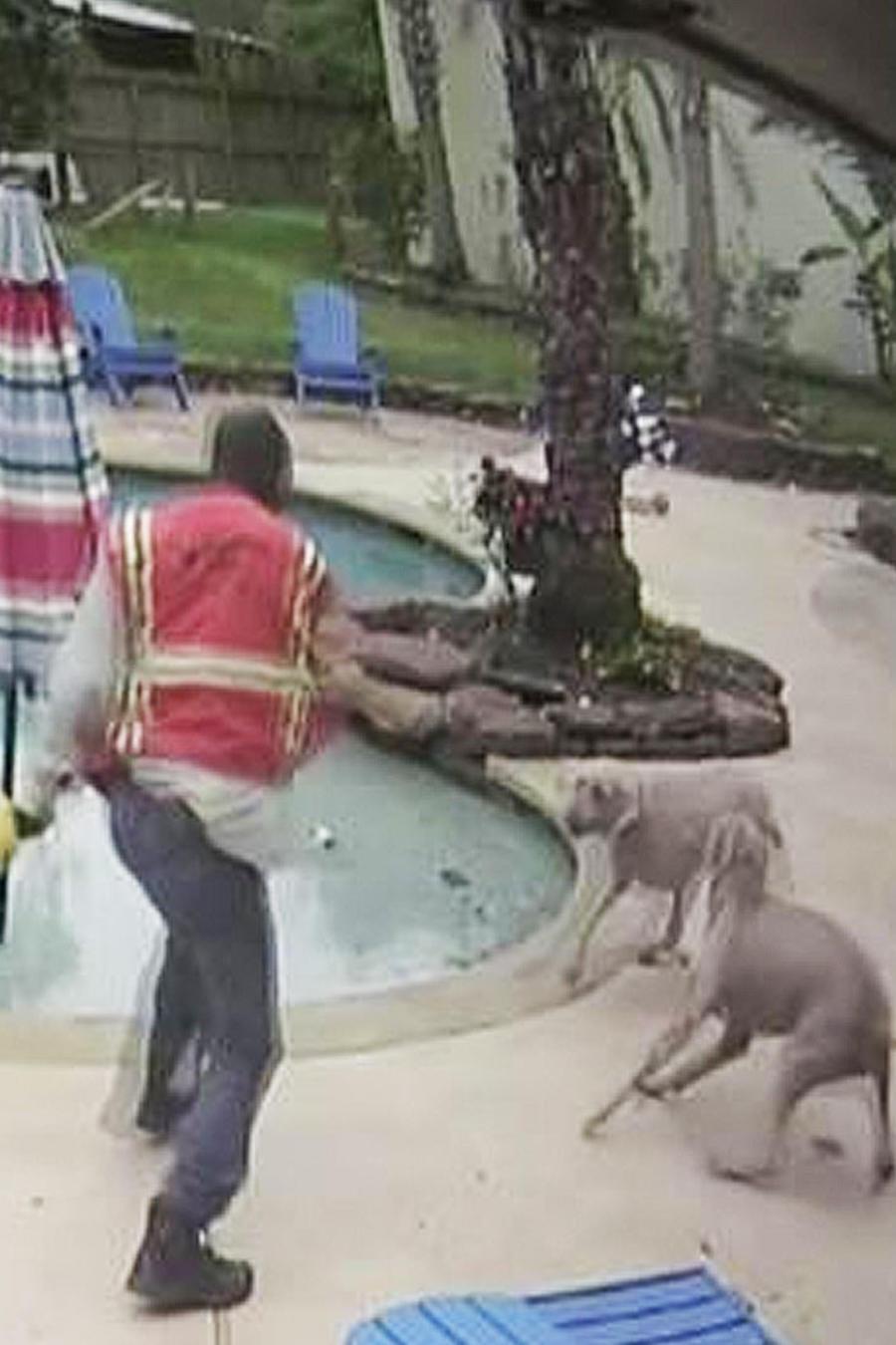 trabajador golpea perros