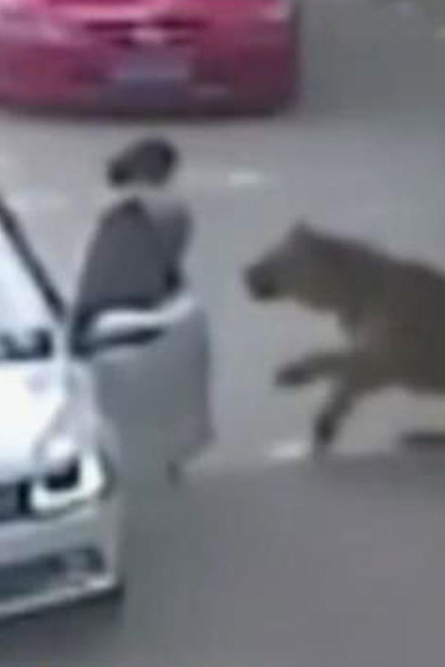 ¡Un tigre atacó y mató a una mujer en un zoológico!