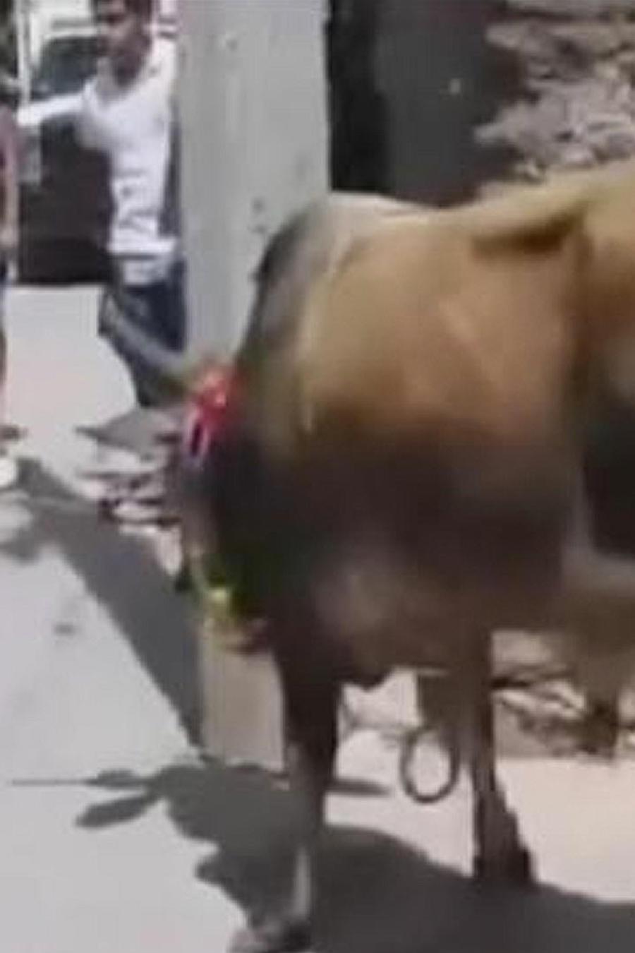 toro para fiesta