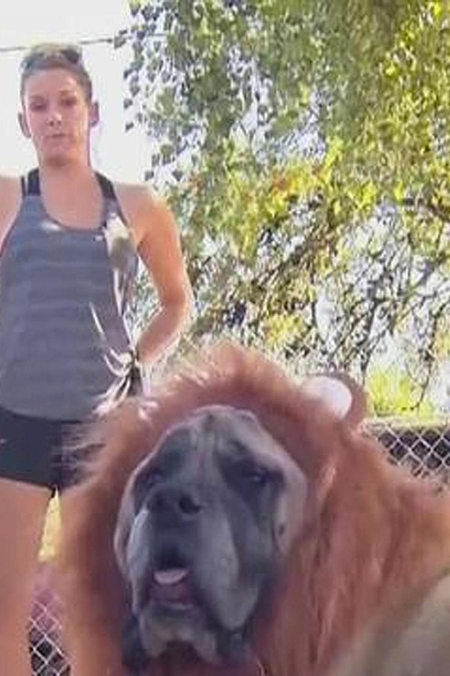 perro con peluca