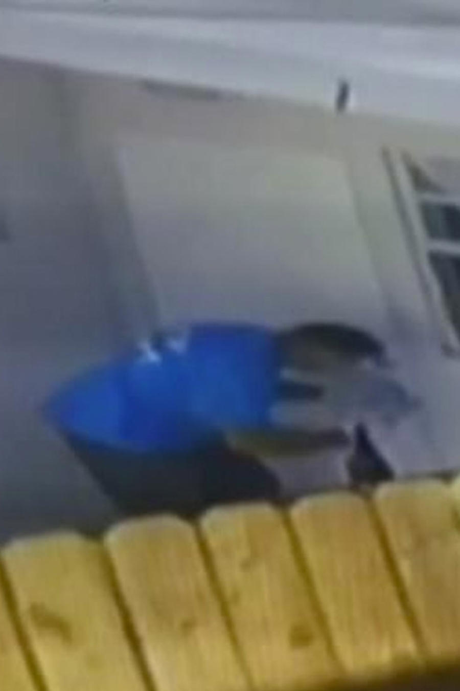 ladron arrasa en casas