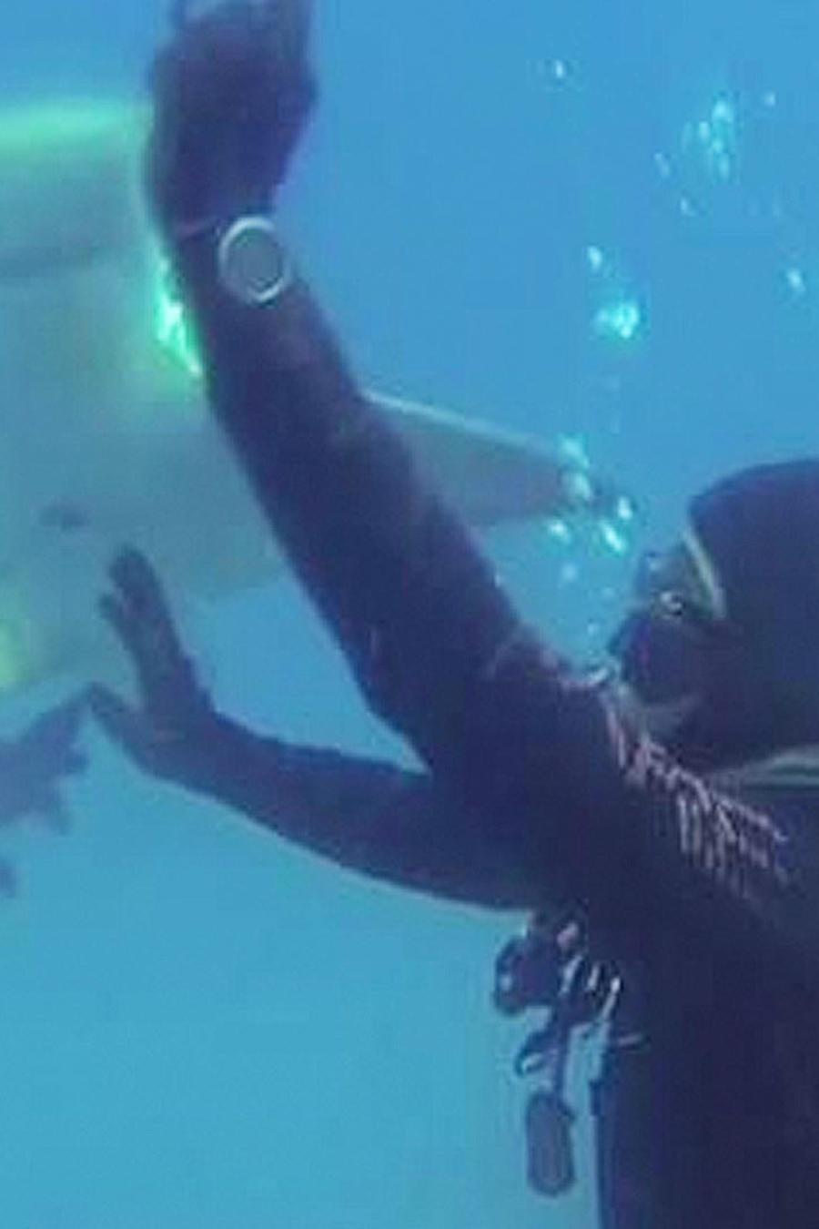 salvan a tiburon
